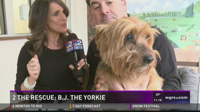 2 the Rescue:  BJ the Yorkie