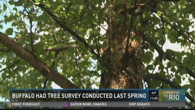 Buffalo Tree Survey