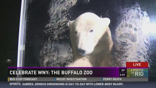 Celebrate WNY: Luna at the Buffalo Zoo