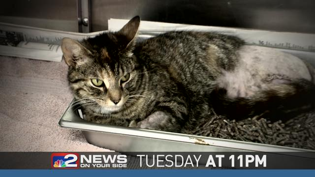 Tuesday at 11pm, Tracking Animal Abusers