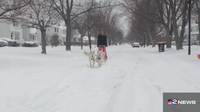 Sled Dogs in Tonawanda