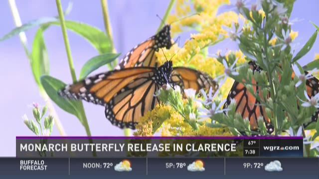 Eastern Monarch Butterfly Farm